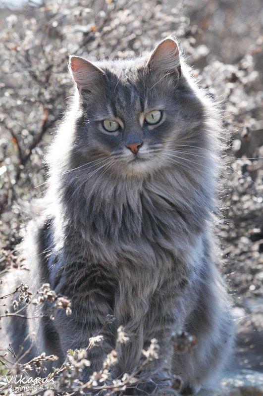 Brutal Cat 3 by Vikarus