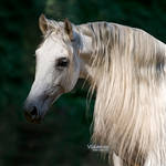 Horse in sunlight by Vikarus