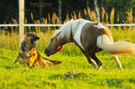 dogs hunter Serpantine