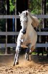 Gallop from Zingaro