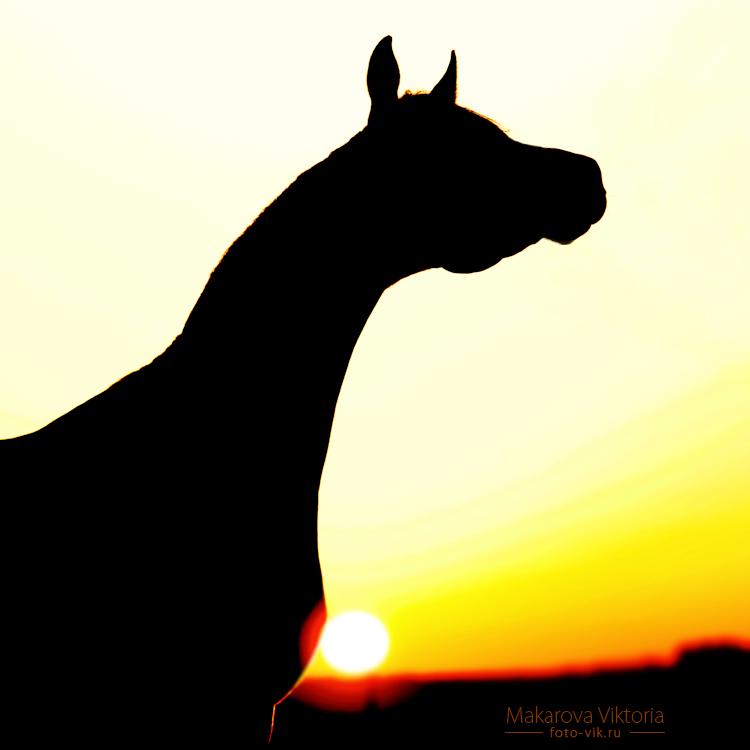 arabian sunrise by Vikarus