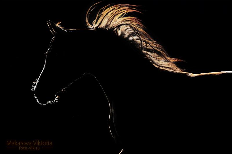 light in the dark by Vikarus
