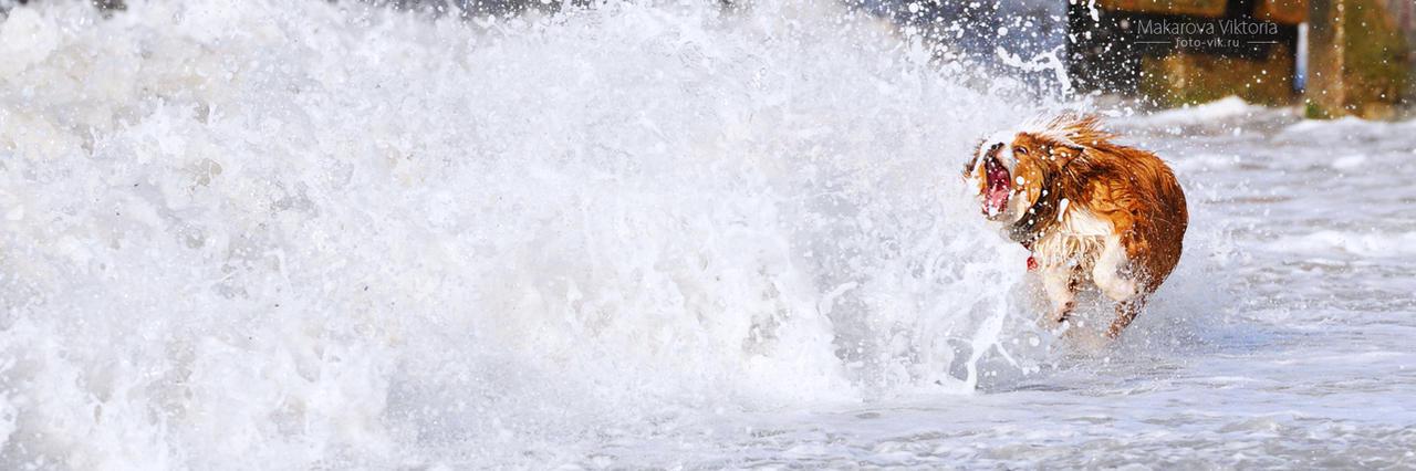 Big wave by Vikarus