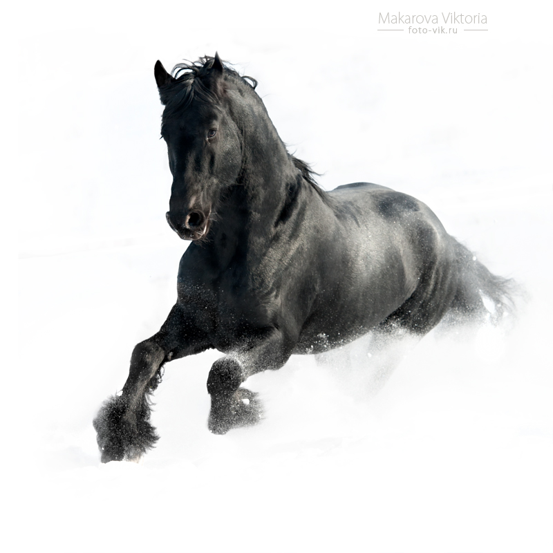 Ficha de Nadya Black_in_the_white_by_vikarus-d4vsw2f