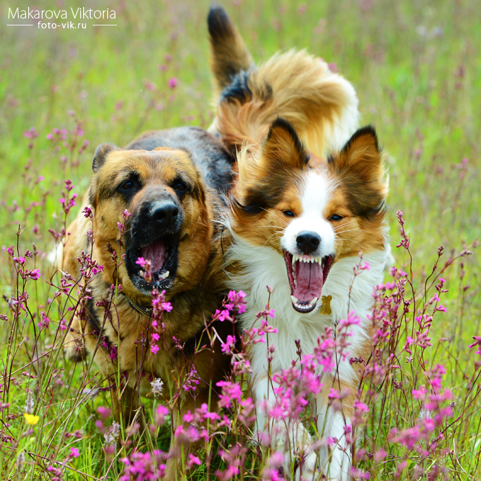 Smiling smiling smiling dogs by Vikarus