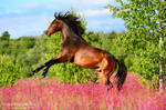 Helios in the pink flowers