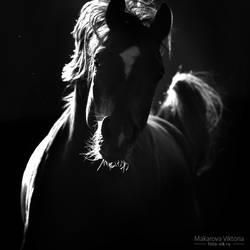 Dark and light by Vikarus
