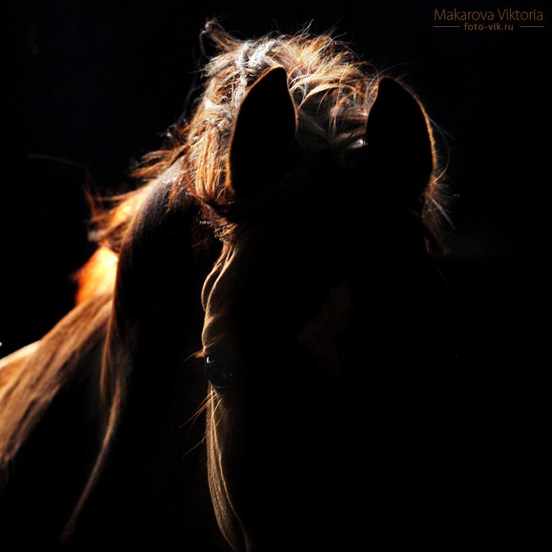 Dark and light 2 by Vikarus