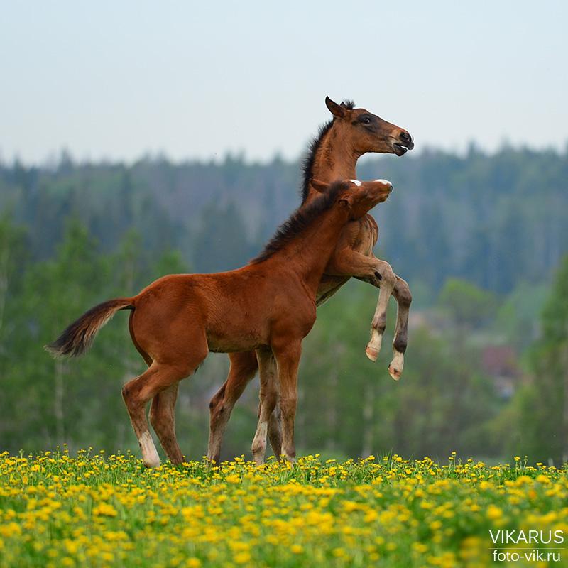Foals by Vikarus