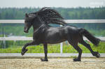 Anthon B runs gallop by Vikarus