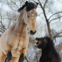 PonyDevil