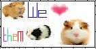 we love them guinea pigs by oaamiwolf
