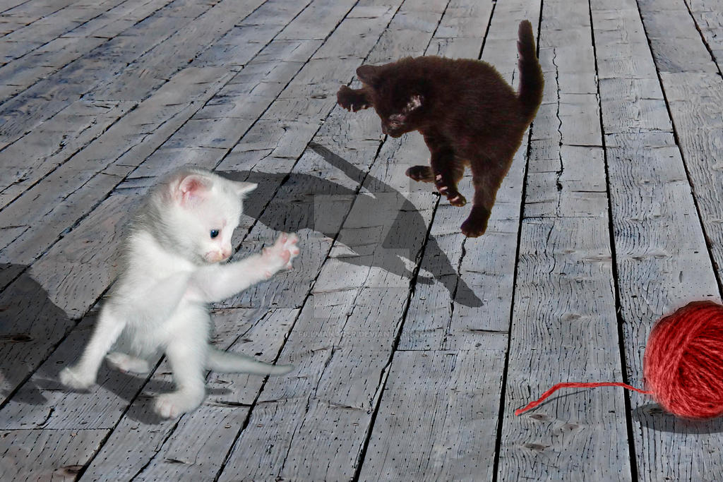 Kitten Battle