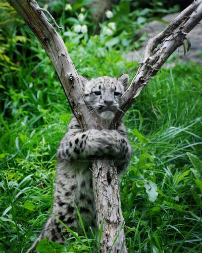Tree Hugging Cub