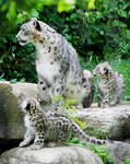 Tiga and Cubs 4