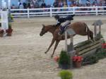 Devon Horse Show 5