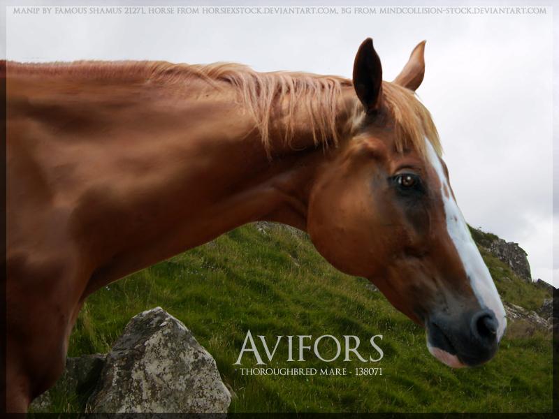Avifors by FamousShamus109