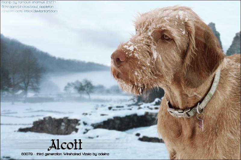 Alcott by FamousShamus109