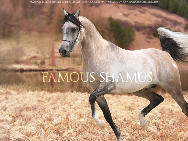 Arabian by FamousShamus109