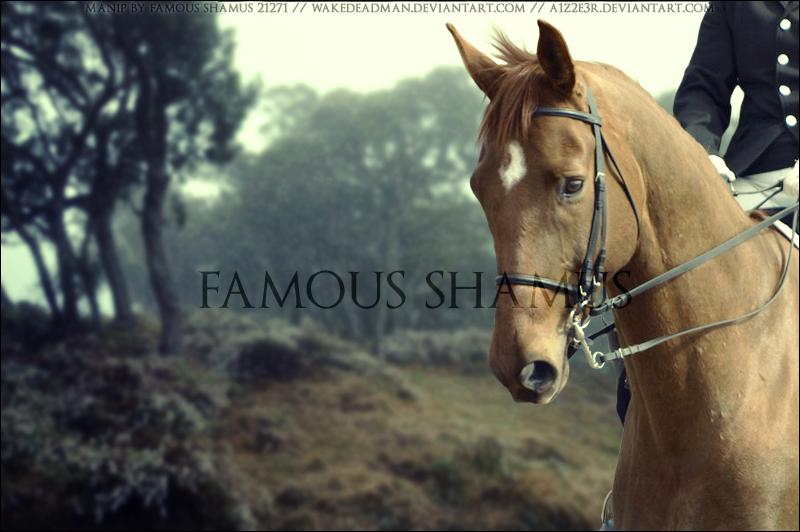 Chestnut 01 by FamousShamus109