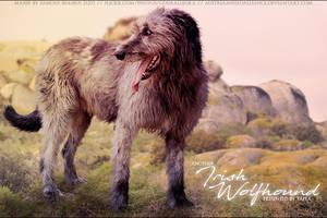 Tapla Irish Wolfhound by FamousShamus109