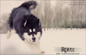 Roux by FamousShamus109