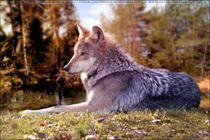 Dire Wolf Roxxy 01 by FamousShamus109