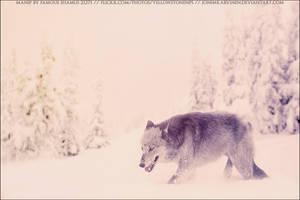 Dire Wolf Roxxy 02 by FamousShamus109