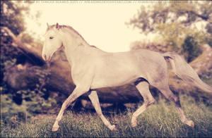 Roxxy Lusitano 07 by FamousShamus109