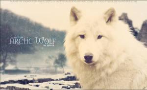 Zephyr Arctic Wolf by FamousShamus109