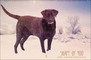 Shape of You by FamousShamus109