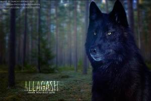Allagash by FamousShamus109