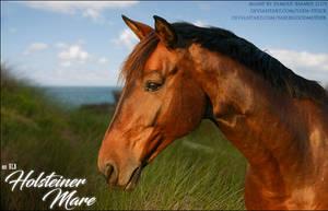 HLB Holsteiner Mare by FamousShamus109