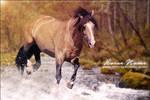 Welsh Pony 01