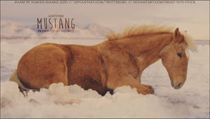 Fenway Mustang