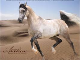 Audacity Arab by FamousShamus109