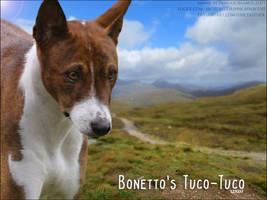 Bonetto's tuco-tuco - basenji by FamousShamus109