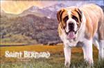 Audacity Saint Bernard