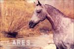 arab - Ares