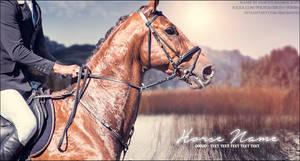 Bay English Horse