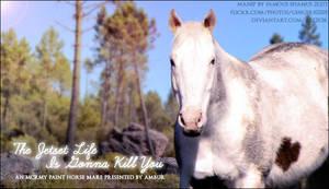 The Jetset Life - paint horse