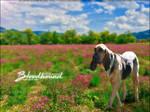 Bloodhound by Whim