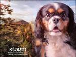 Whim CKC - Storm
