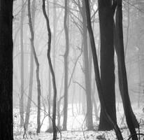 Mist II by Greyguardian