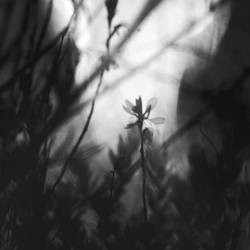 Strange Blossom by Greyguardian