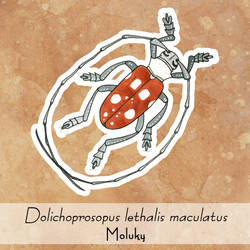 Dolichoprosopus lethalis maculatus by yeyra