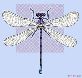 Argia fumipennis violacea by yeyra