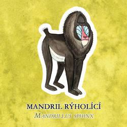 Mandrill by yeyra