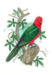 Australian King-parrot by yeyra