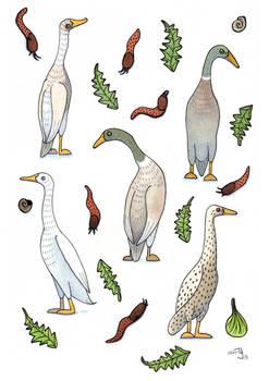 Ducks and slugs